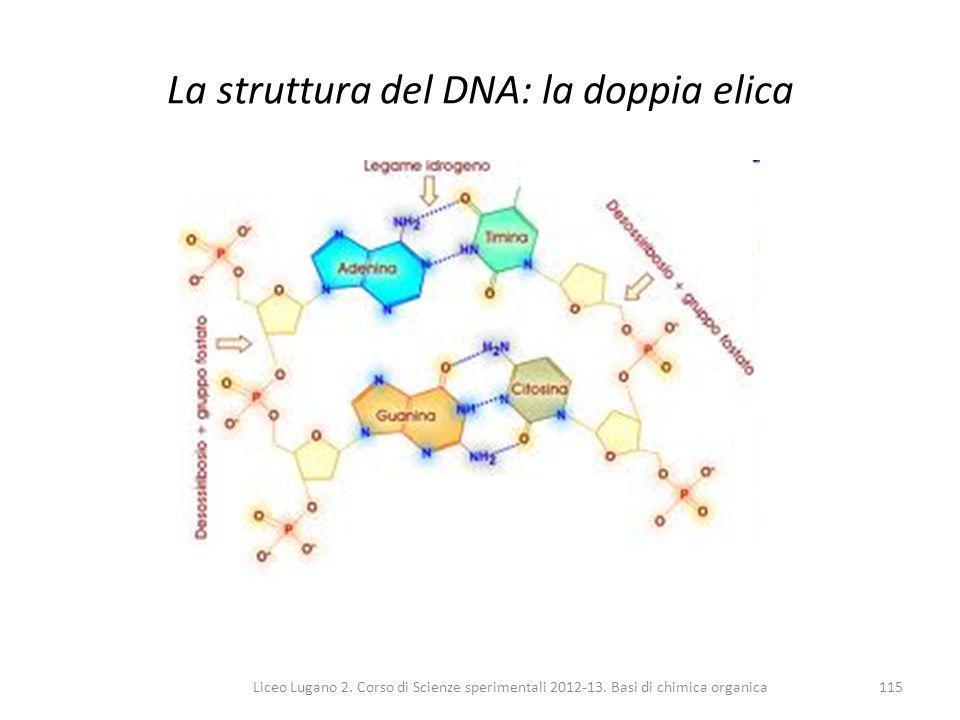 Liceo Lugano 2. Corso di Scienze sperimentali 2012-13. Basi di chimica organica115 La struttura del DNA: la doppia elica