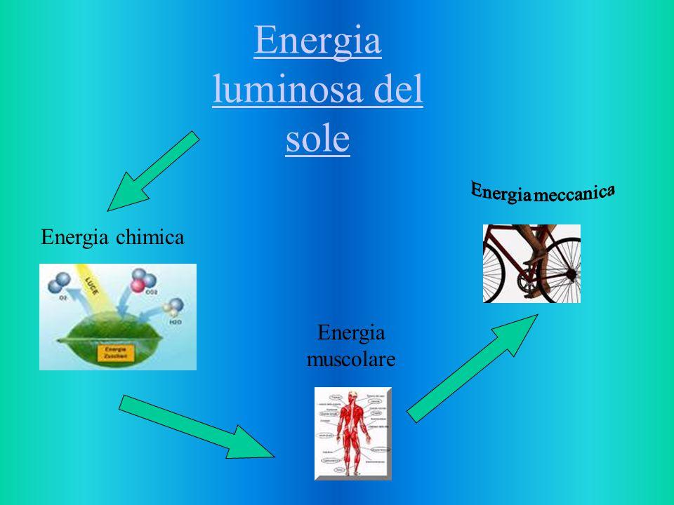 Energia luminosa del sole Energia chimica Energia muscolare