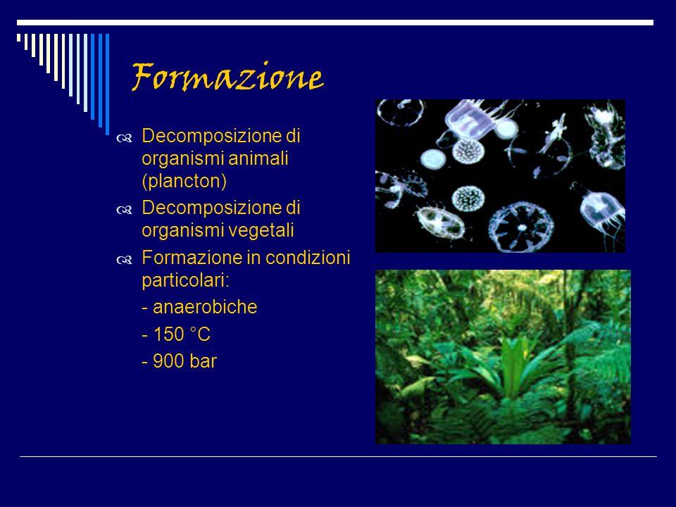 Formazione  Decomposizione di organismi animali (plancton)  Decomposizione di organismi vegetali  Formazione in condizioni particolari: - anaerobic