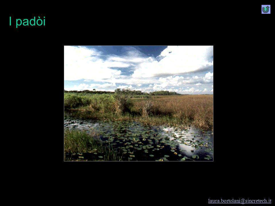 Modena e i rifiuti I rifiuti e Modena laura.bortolani@sincretech.it 1997-98 cl. seconda A I.G.E.A. prof.ssa Laura Bortolani Fregni Meta