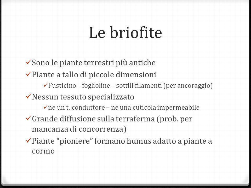 Le briofite Sono le piante terrestri più antiche Piante a tallo di piccole dimensioni Fusticino – foglioline – sottili filamenti (per ancoraggio) Nessun tessuto specializzato ne un t.