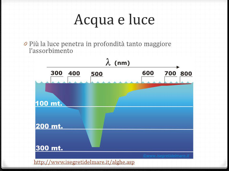 alghe verdi: clorofilla Alghe brune:clorofilla + ficoxantina penetrazione media: radiazioni giall- arancione Alghe rosse:clorofilla + ficoeritrina max penetrazione: radiazioni verde-azzurre