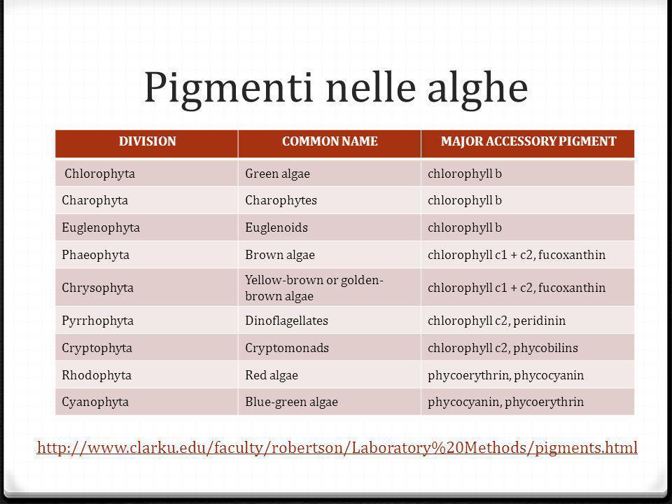Pigmenti nelle alghe DIVISIONCOMMON NAMEMAJOR ACCESSORY PIGMENT ChlorophytaGreen algaechlorophyll b CharophytaCharophyteschlorophyll b EuglenophytaEuglenoidschlorophyll b PhaeophytaBrown algaechlorophyll c1 + c2, fucoxanthin Chrysophyta Yellow-brown or golden- brown algae chlorophyll c1 + c2, fucoxanthin Pyrrhophyta Dinoflagellateschlorophyll c2, peridinin CryptophytaCryptomonadschlorophyll c2, phycobilins RhodophytaRed algaephycoerythrin, phycocyanin CyanophytaBlue-green algaephycocyanin, phycoerythrin http://www.clarku.edu/faculty/robertson/Laboratory%20Methods/pigments.html