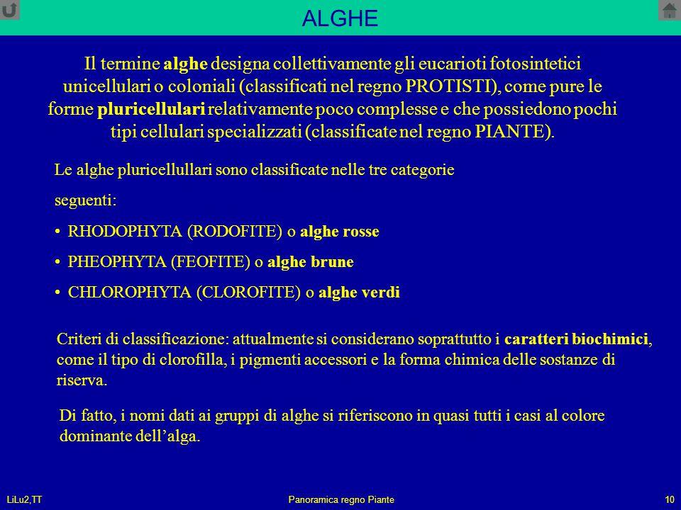 LiLu2,TTPanoramica regno Piante10 ALGHE Il termine alghe designa collettivamente gli eucarioti fotosintetici unicellulari o coloniali (classificati ne
