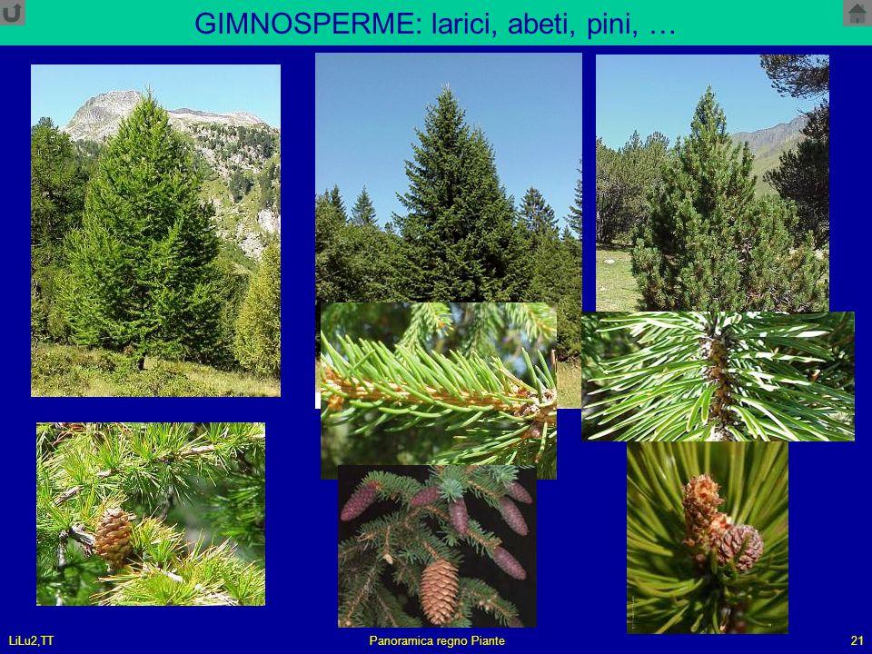 LiLu2,TTPanoramica regno Piante21 GIMNOSPERME: larici, abeti, pini, …