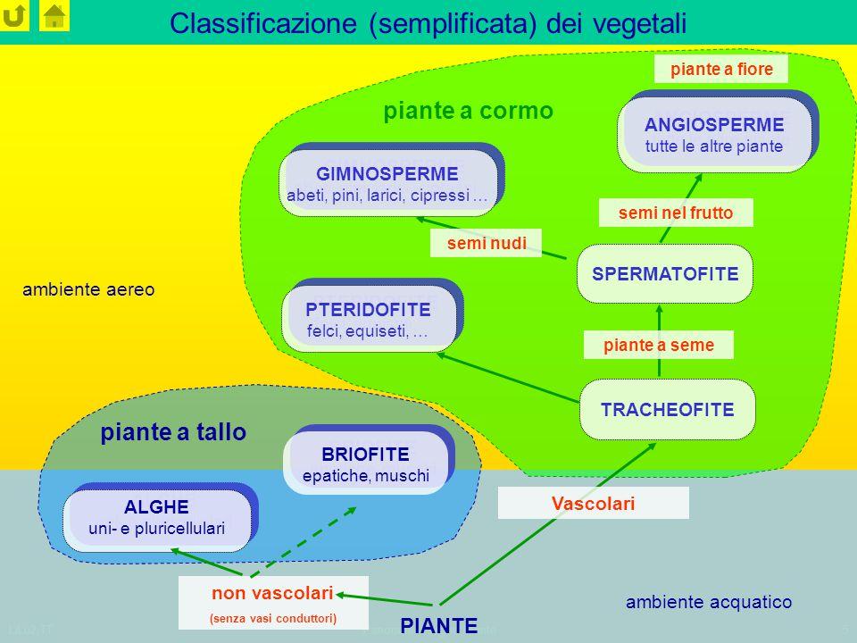 LiLu2,TTPanoramica regno Piante5 Classificazione (semplificata) dei vegetali PIANTE non vascolari (senza vasi conduttori) BRIOFITE epatiche, muschi BR