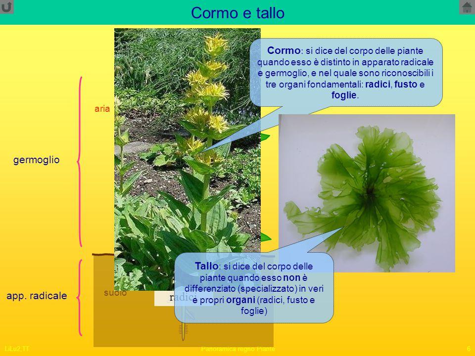 LiLu2,TTPanoramica regno Piante6 Cormo e tallo acqua suolo aria germoglio app. radicale radici fusto foglie Cormo : si dice del corpo delle piante qua