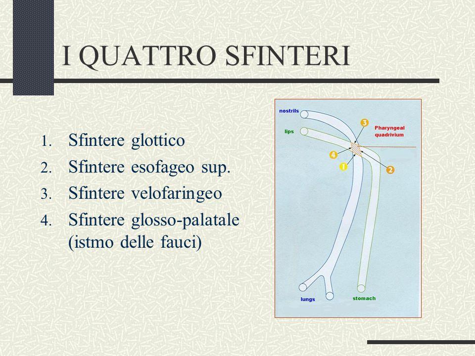 I QUATTRO SFINTERI 1. Sfintere glottico 2. Sfintere esofageo sup. 3. Sfintere velofaringeo 4. Sfintere glosso-palatale (istmo delle fauci)
