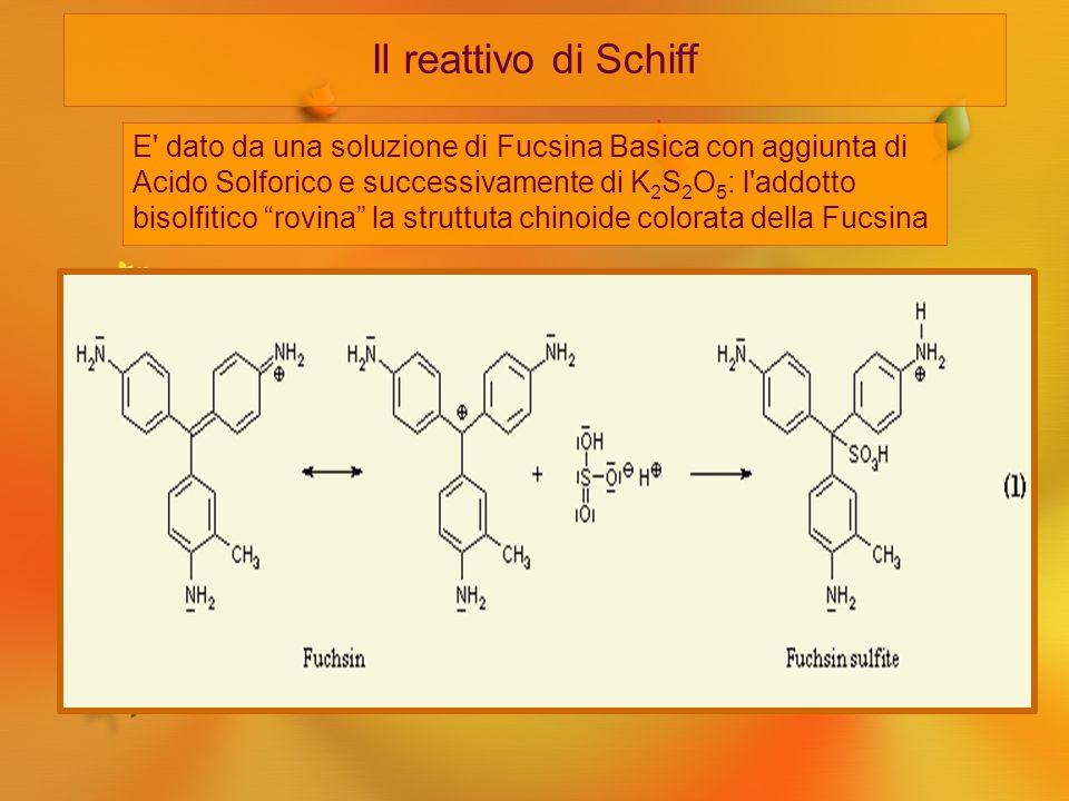 Il reattivo di Schiff E' dato da una soluzione di Fucsina Basica con aggiunta di Acido Solforico e successivamente di K 2 S 2 O 5 : l'addotto bisolfit