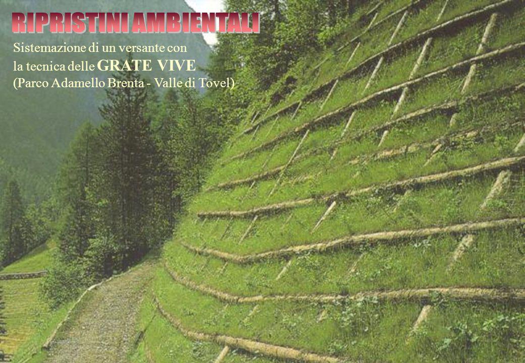 Sistemazione di un versante con la tecnica delle GRATE VIVE (Parco Adamello Brenta - Valle di Tovel)