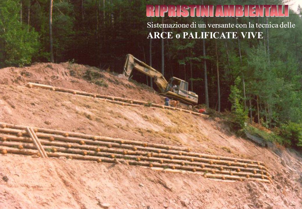 Sistemazione di un versante con la tecnica delle ARCE o PALIFICATE VIVE
