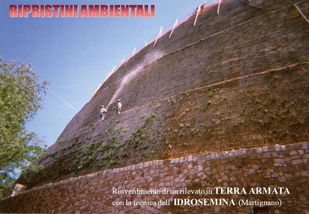 Rinverdimento di un rilevato in TERRA ARMATA con la tecnica dell' IDROSEMINA (Martignano)