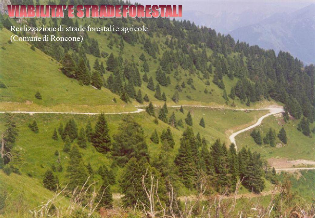 Realizzazione di strade forestali e agricole (Comune di Roncone)