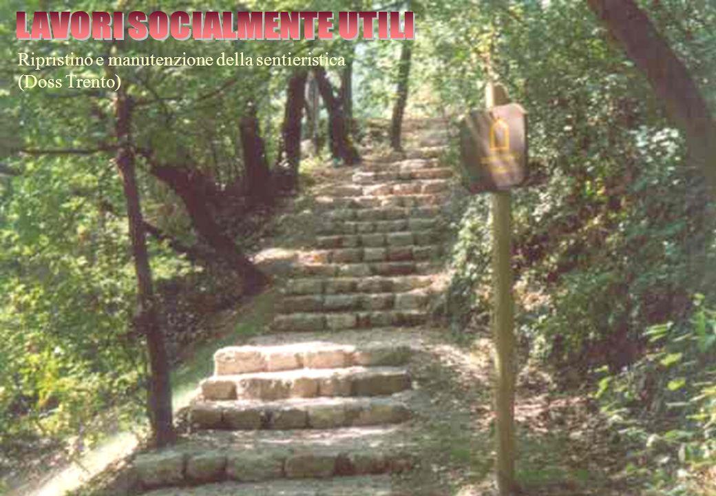 Ripristino e manutenzione della sentieristica (Doss Trento)
