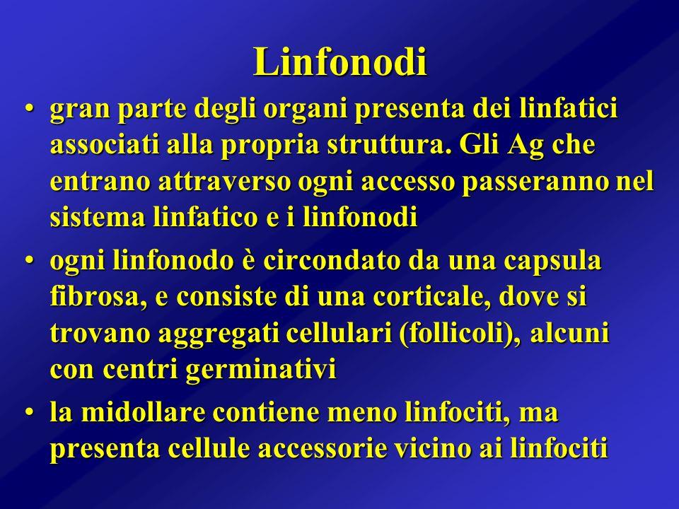 Linfonodi gran parte degli organi presenta dei linfatici associati alla propria struttura. Gli Ag che entrano attraverso ogni accesso passeranno nel s