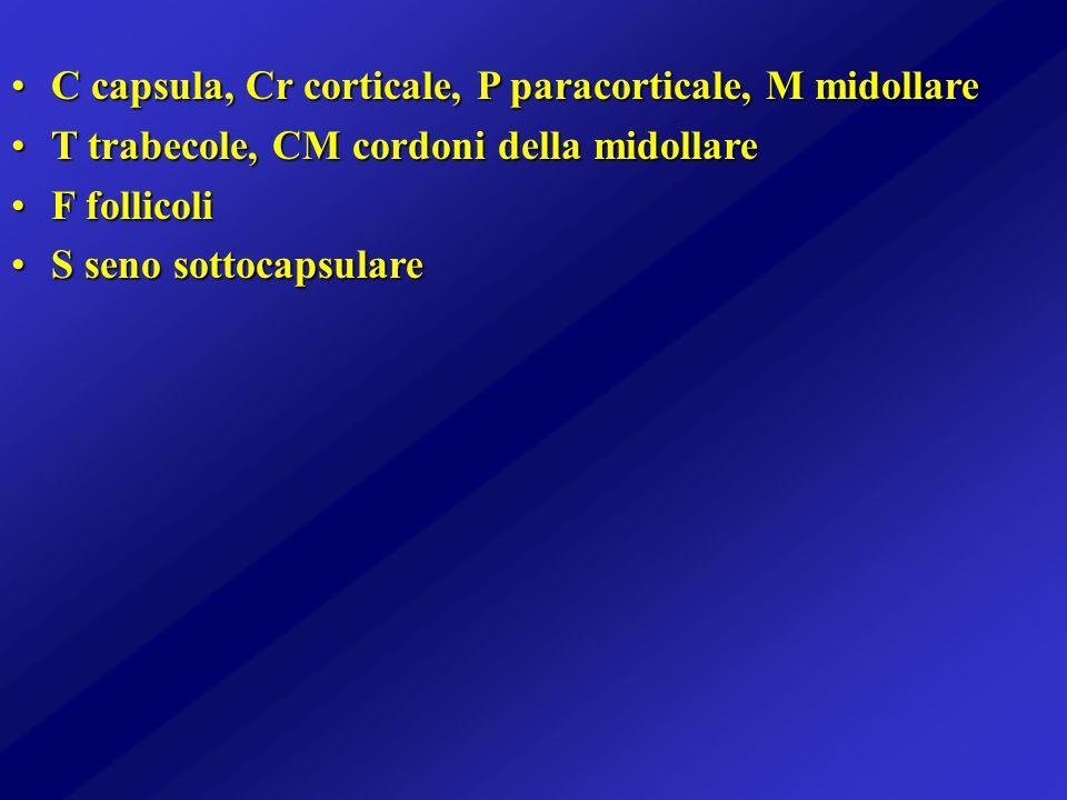 C capsula, Cr corticale, P paracorticale, M midollareC capsula, Cr corticale, P paracorticale, M midollare T trabecole, CM cordoni della midollareT tr