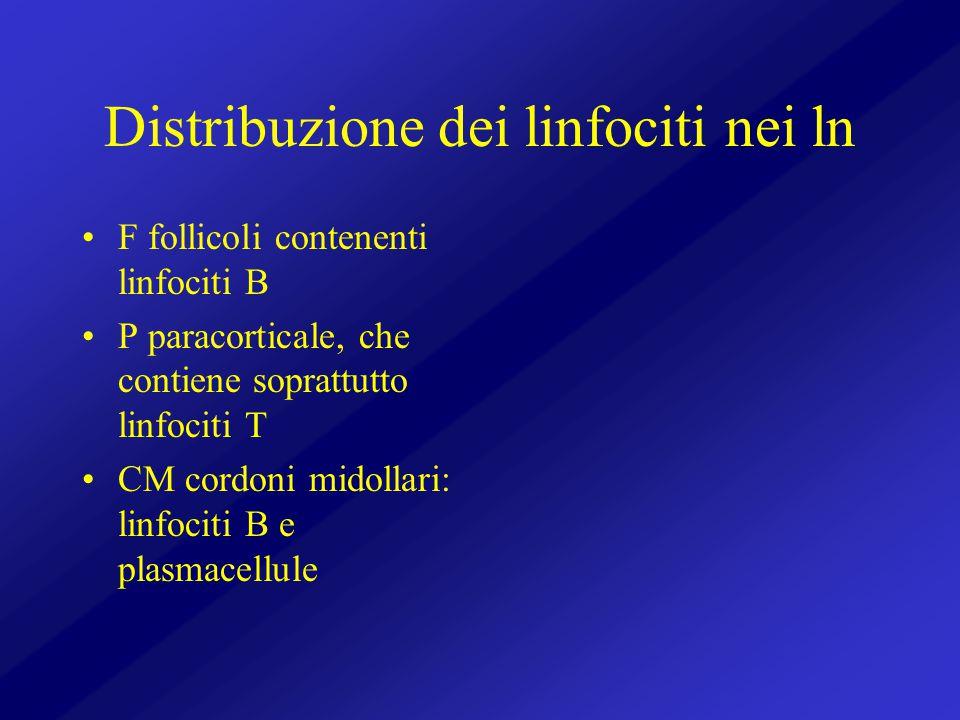 Distribuzione dei linfociti nei ln F follicoli contenenti linfociti B P paracorticale, che contiene soprattutto linfociti T CM cordoni midollari: linf