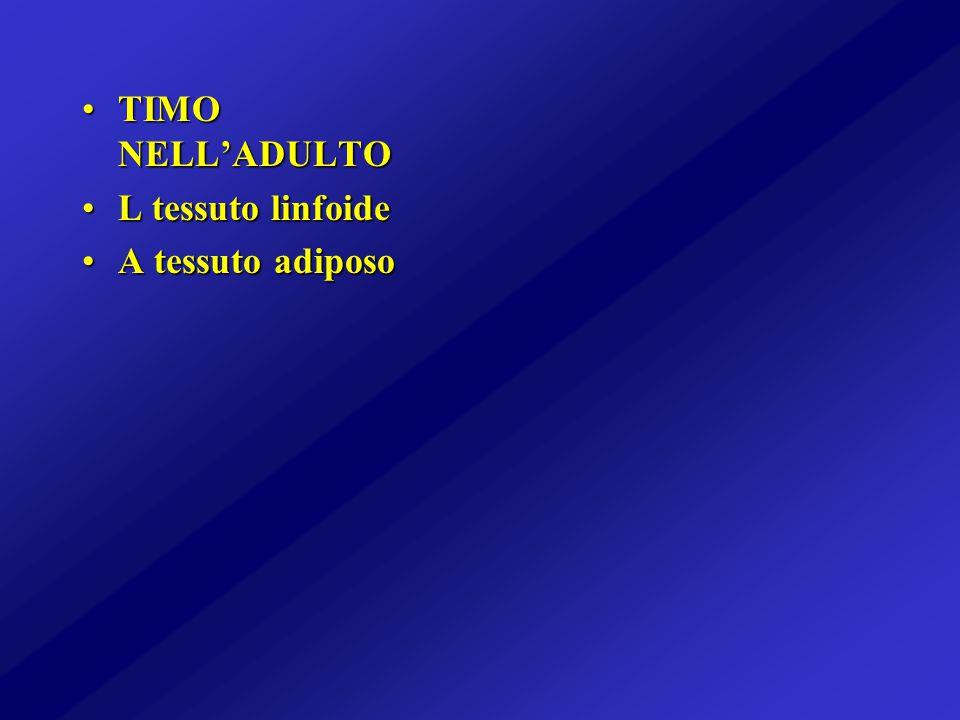 TIMO NELL'ADULTOTIMO NELL'ADULTO L tessuto linfoideL tessuto linfoide A tessuto adiposoA tessuto adiposo