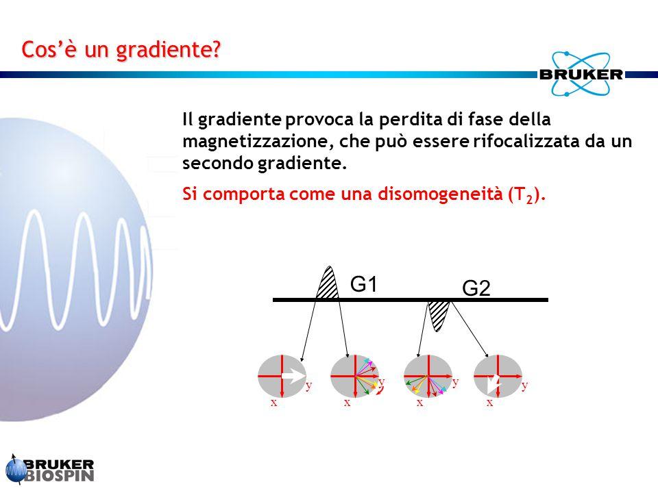 Il gradiente provoca la perdita di fase della magnetizzazione, che può essere rifocalizzata da un secondo gradiente. Si comporta come una disomogeneit