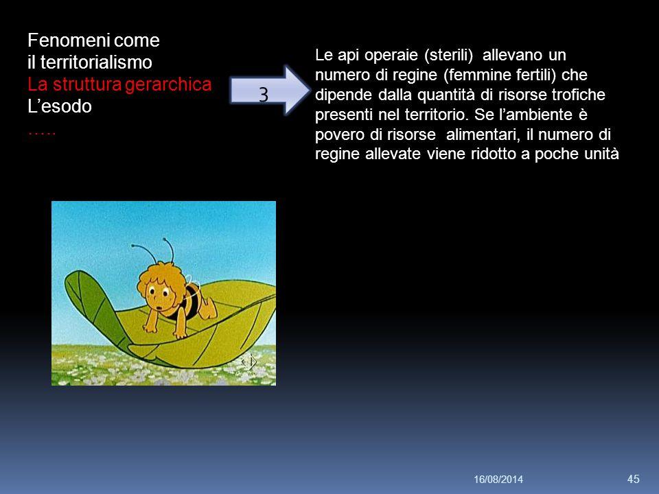 Fenomeni come il territorialismo La struttura gerarchica L'esodo ….. 3 Le api operaie (sterili) allevano un numero di regine (femmine fertili) che dip