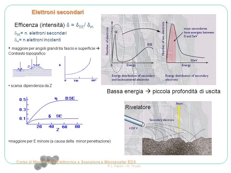 Elettroni secondari maggiore per angoli grandi tra fascio e superficie  Contrasto topografico scarsa dipendenza da Z maggiore per E minore (a causa d