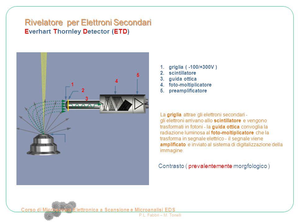Rivelatore per Elettroni Secondari Everhart Thornley Detector (ETD) Elemento pesante Corso di Microscopia Elettronica a Scansione e Microanalisi EDS P