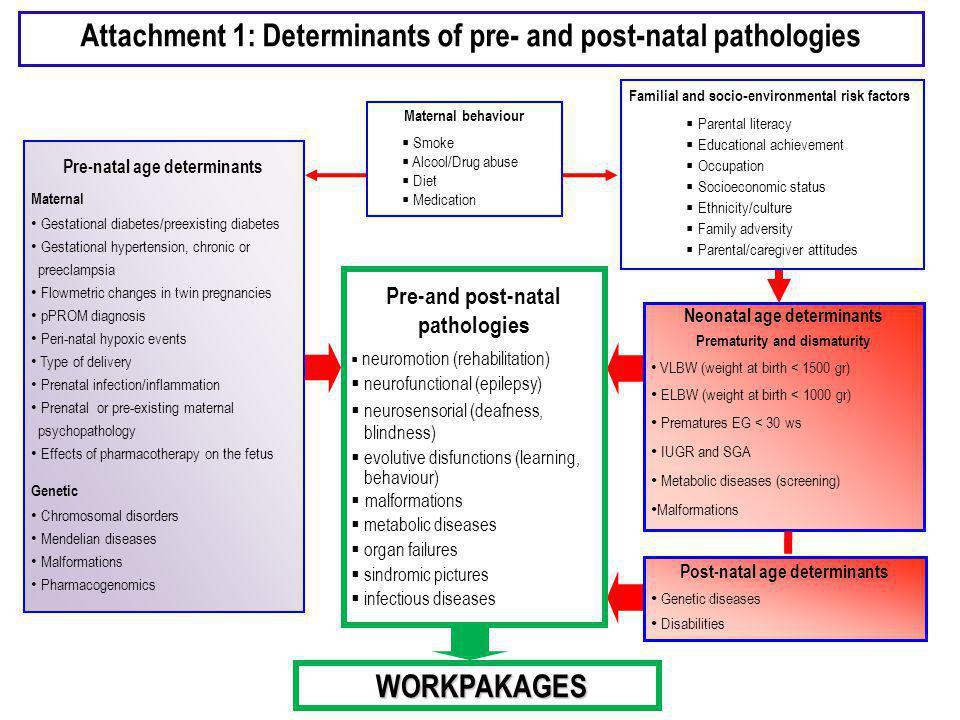 Allegato 2: Workpakages (WP) WP n.1:Definizione delle patologie pre- e post-natali WP n.
