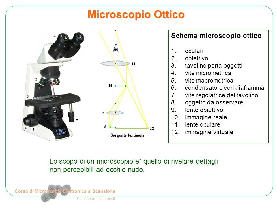 Corso di Microscopia Elettronica a Scansione P.L. Fabbri – M. Tonelli Schema microscopio ottico 1.oculari 2.obiettivo 3.tavolino porta oggetti 4.vite