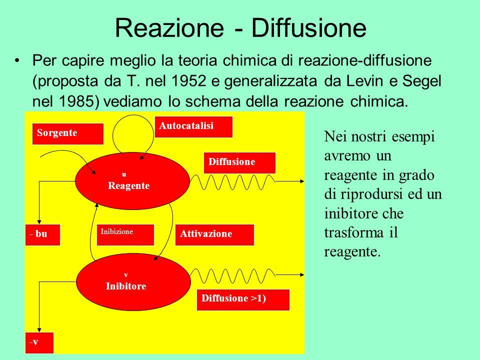 Reazione - Diffusione Per capire meglio la teoria chimica di reazione-diffusione (proposta da T. nel 1952 e generalizzata da Levin e Segel nel 1985) v