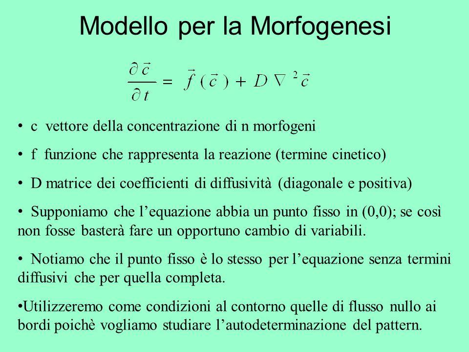 Modello per la Morfogenesi c vettore della concentrazione di n morfogeni f funzione che rappresenta la reazione (termine cinetico) D matrice dei coeff