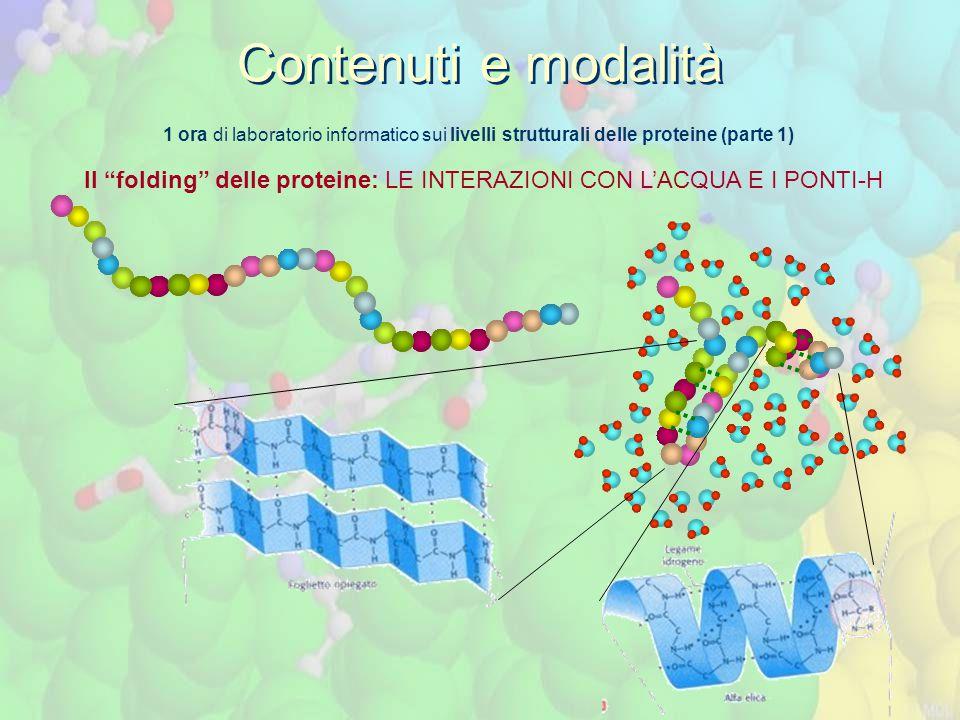 1 ora di laboratorio informatico sui livelli strutturali delle proteine (parte 1) Il folding delle proteine: LE INTERAZIONI CON L'ACQUA E I PONTI-H Contenuti e modalità