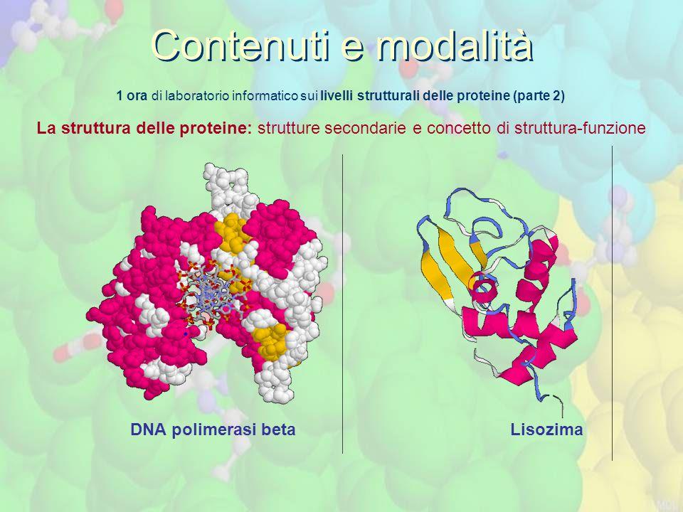 1 ora di laboratorio informatico sui livelli strutturali delle proteine (parte 2) La struttura delle proteine: strutture secondarie e concetto di struttura-funzione Contenuti e modalità DNA polimerasi beta Lisozima