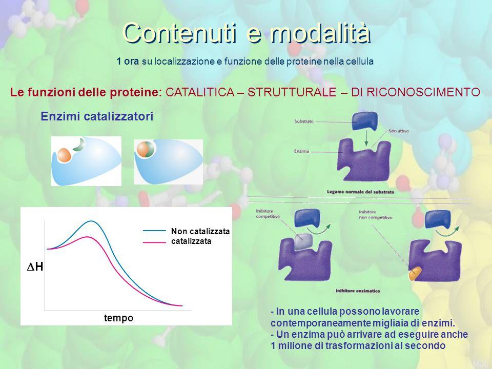 1 ora su localizzazione e funzione delle proteine nella cellula Le funzioni delle proteine: CATALITICA – STRUTTURALE – DI RICONOSCIMENTO Contenuti e m