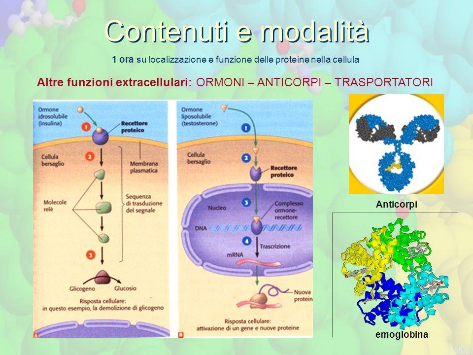 1 ora su localizzazione e funzione delle proteine nella cellula Contenuti e modalità Altre funzioni extracellulari: ORMONI – ANTICORPI – TRASPORTATORI