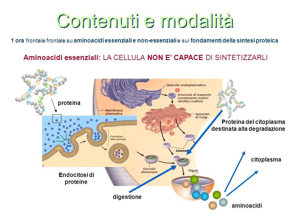 Contenuti e modalità 1 ora frontale frontale su aminoacidi essenziali e non-essenziali e sui fondamenti della sintesi proteica Aminoacidi essenziali: LA CELLULA NON E' CAPACE DI SINTETIZZARLI citoplasma aminoacidi Endocitosi di proteine proteina digestione Proteina del citoplasma destinata alla degradazione
