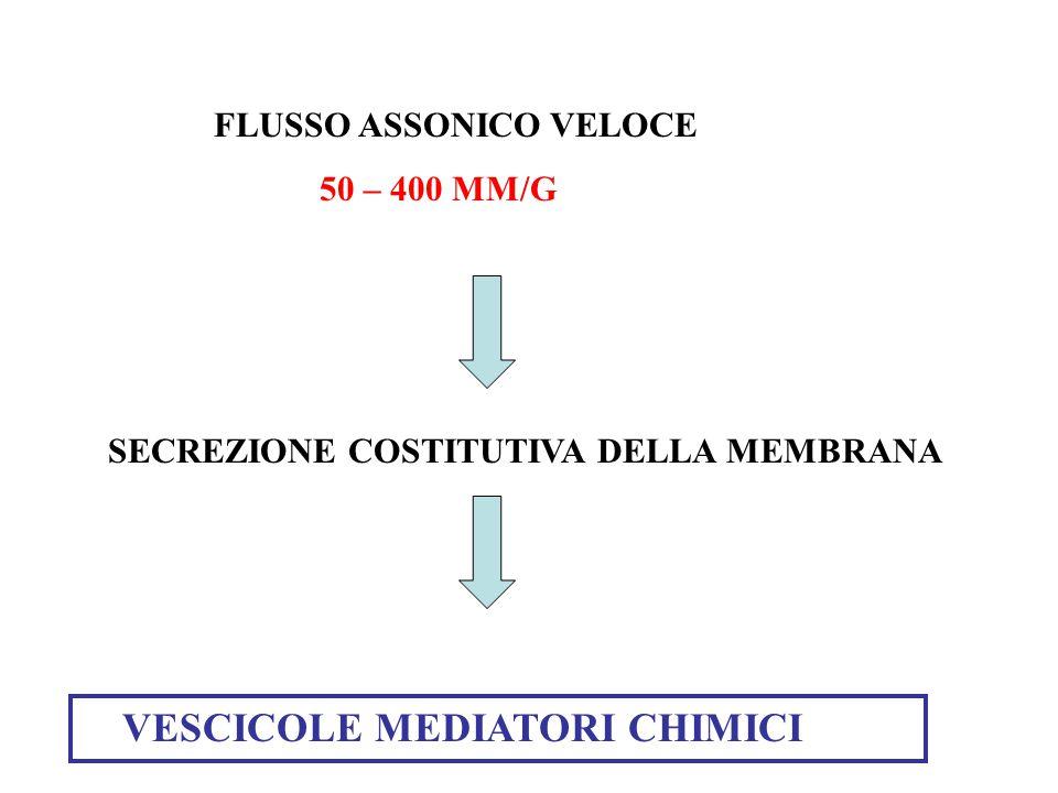FLUSSO ASSONICO VELOCE 50 – 400 MM/G SECREZIONE COSTITUTIVA DELLA MEMBRANA VESCICOLE MEDIATORI CHIMICI