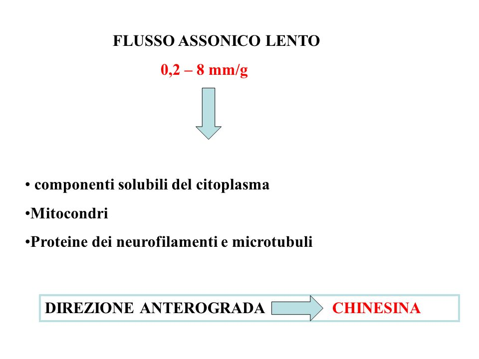 FLUSSO ASSONICO LENTO 0,2 – 8 mm/g componenti solubili del citoplasma Mitocondri Proteine dei neurofilamenti e microtubuli DIREZIONE ANTEROGRADA CHINESINA