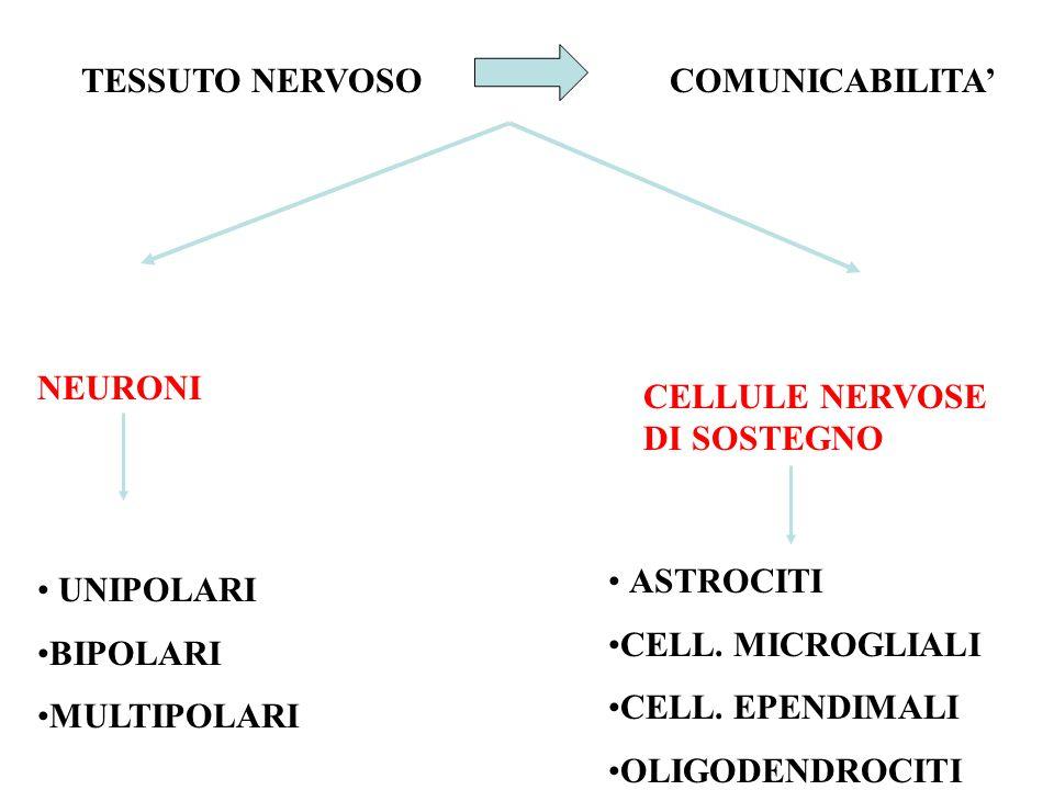 TESSUTO NERVOSOCOMUNICABILITA' NEURONI CELLULE NERVOSE DI SOSTEGNO UNIPOLARI BIPOLARI MULTIPOLARI ASTROCITI CELL.