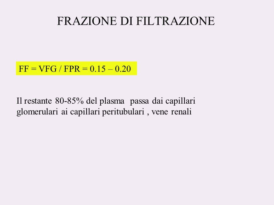 FRAZIONE DI FILTRAZIONE FF = VFG / FPR = 0.15 – 0.20 Il restante 80-85% del plasma passa dai capillari glomerulari ai capillari peritubulari, vene renali