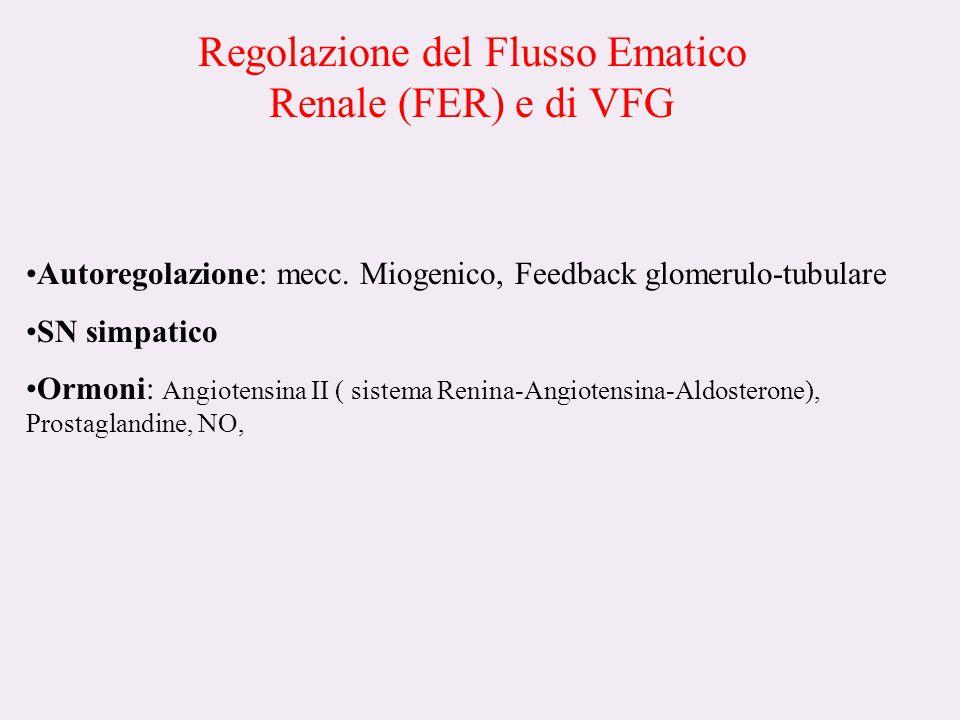 Regolazione del Flusso Ematico Renale (FER) e di VFG Autoregolazione: mecc.