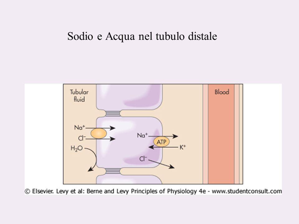 Sodio e Acqua nel tubulo distale