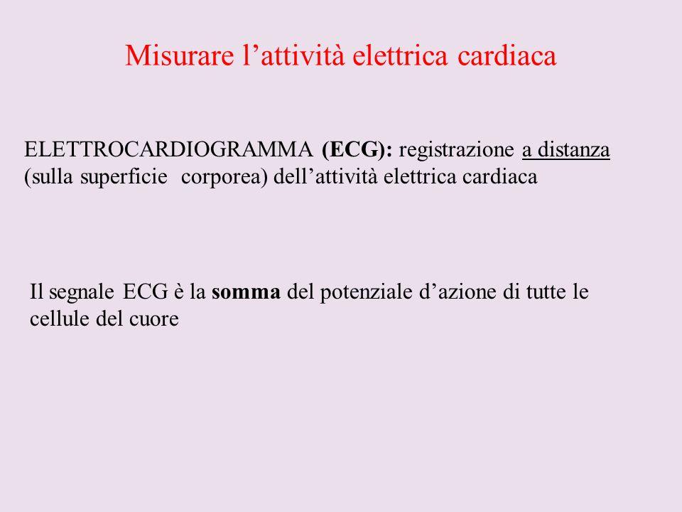 Misurare l'attività elettrica cardiaca ELETTROCARDIOGRAMMA (ECG): registrazione a distanza (sulla superficie corporea) dell'attività elettrica cardiac