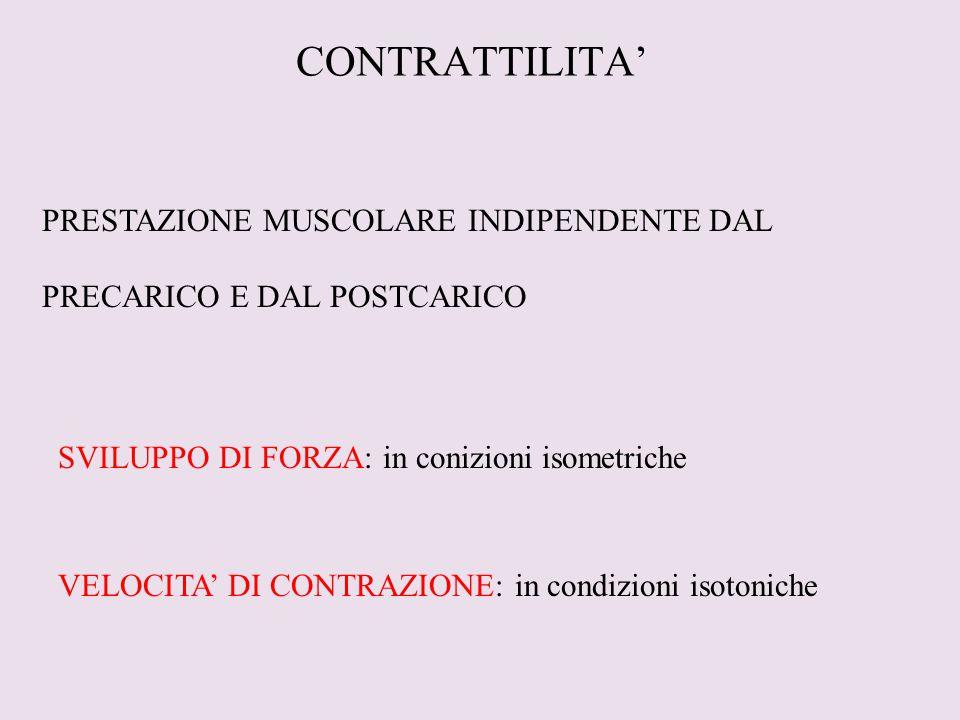 CONTRATTILITA' PRESTAZIONE MUSCOLARE INDIPENDENTE DAL PRECARICO E DAL POSTCARICO SVILUPPO DI FORZA: in conizioni isometriche VELOCITA' DI CONTRAZIONE: