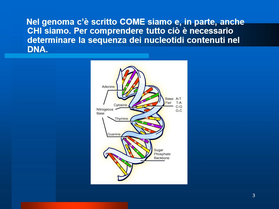 3 Nel genoma c'è scritto COME siamo e, in parte, anche CHI siamo. Per comprendere tutto ciò è necessario determinare la sequenza dei nucleotidi conten