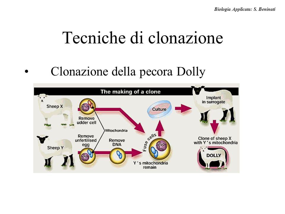 Biologia Applicata: S. Beninati Tecniche di clonazione Clonazione della pecora Dolly