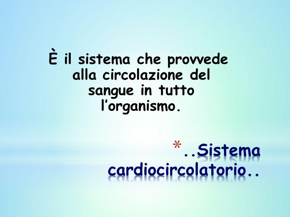 È il sistema che provvede alla circolazione del sangue in tutto l'organismo.
