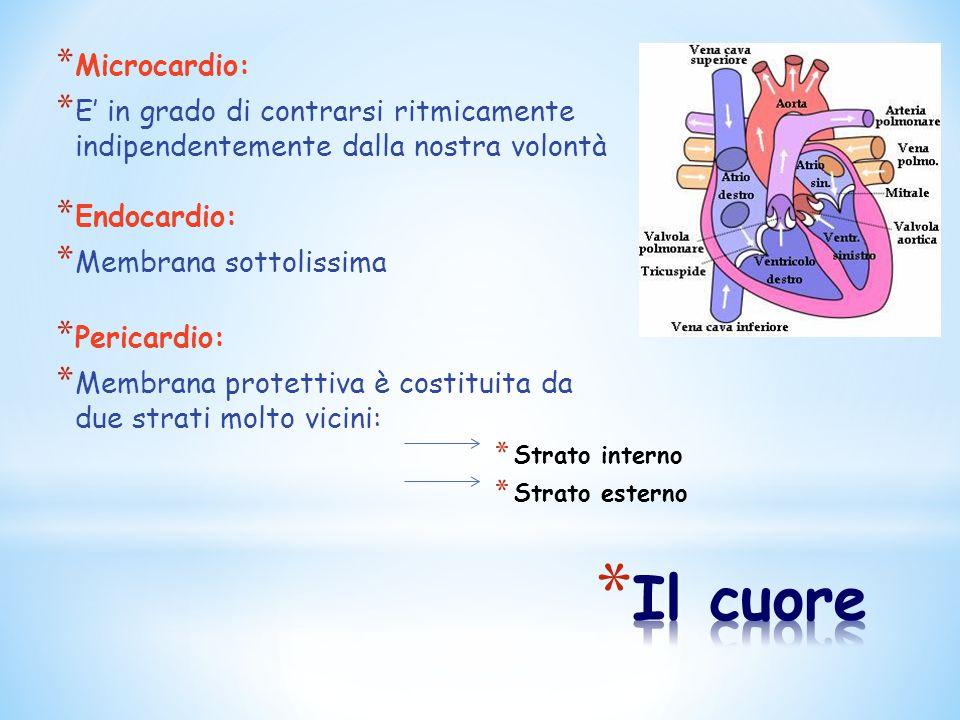 * Microcardio: * E' in grado di contrarsi ritmicamente indipendentemente dalla nostra volontà * Endocardio: * Membrana sottolissima * Pericardio: * Me