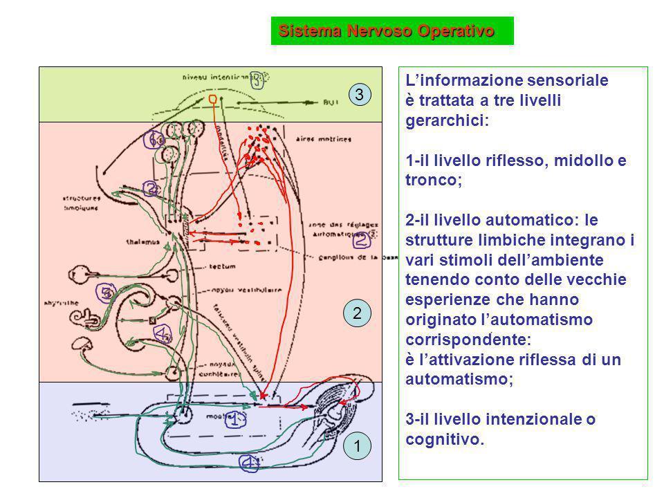 L'informazione sensoriale è trattata a tre livelli gerarchici: 1-il livello riflesso, midollo e tronco; 2-il livello automatico: le strutture limbiche