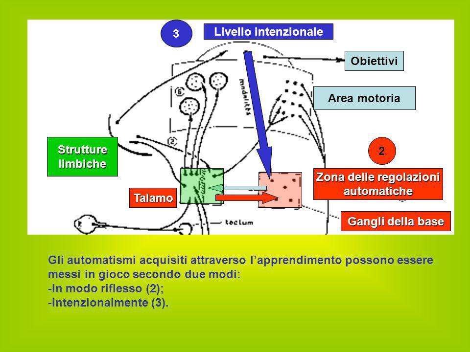 Il cervelletto integra l'insieme delle informazioni propriocettive: -M-Muscolari, articolari e tattili (4), -L-Labirintiche (5) Determina l'aggiustamento posturale in ordine alla verticalità (fascio vestibolo-spinale) Cervelletto 4 - Derma Midollo Fascio vestibolo spinale 5 - Labirinto 4 – Muscoli e articolazioni