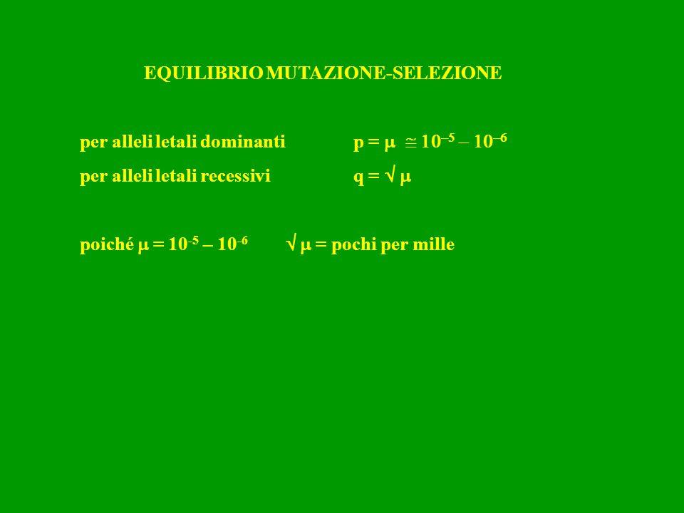 EQUILIBRIO MUTAZIONE-SELEZIONE per alleli letali dominantip =     per alleli letali recessiviq =   poiché  = 10 -5 – 10 -6   = po